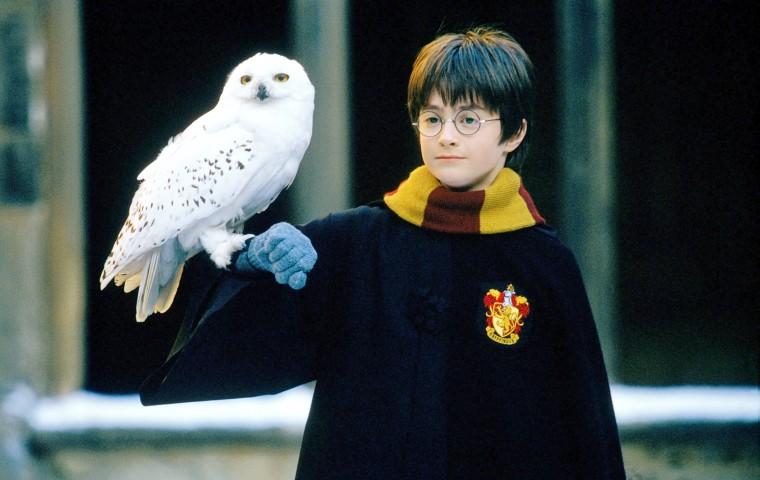 Eule Harry Potter