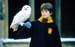 """""""Harry Potter"""": Is a Netflix series coming?"""