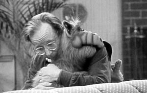 """Alf""-Darsteller Max Wright ist gestorben"