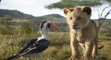 Der König der Löwen Filmbild