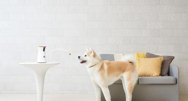 Ein Hund fängt ein Leckerli was aus einer Hundekamera geflogen kommt