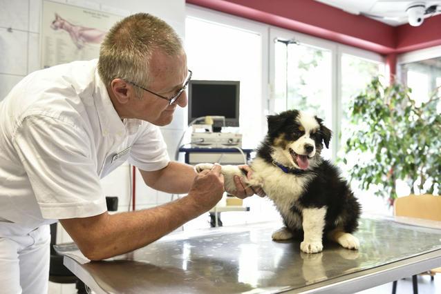 Hautnah Die Tierklinik Dr. Zimmermann