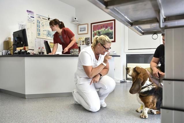 Hautnah Die Tierklinik Rönneburg