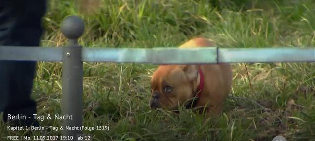 BTN: Tiermisshandlung? Schwere Vorwürfe!