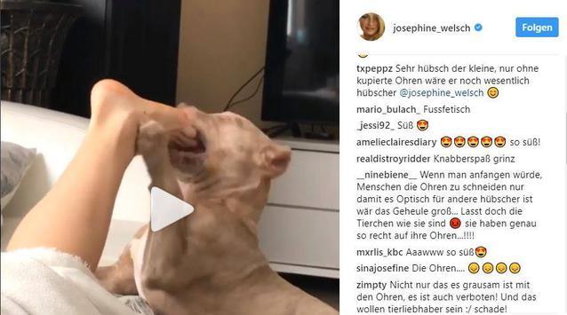 BTN: Josephine Welsch äußert sich zu Tierquälerei-Vorwürfen