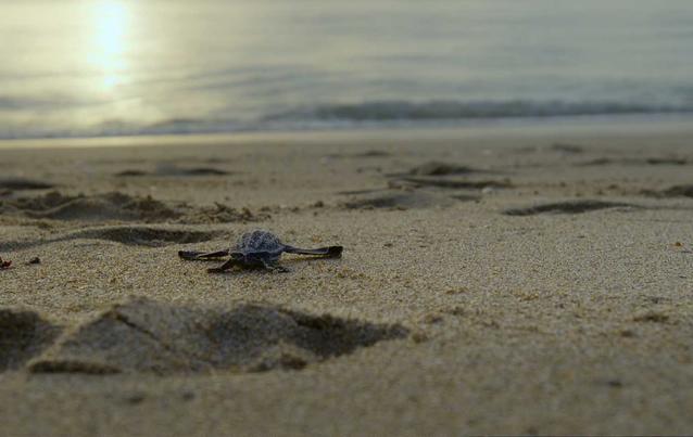 Das Jahr, das die Erde veränderte: Meeresschildkröten