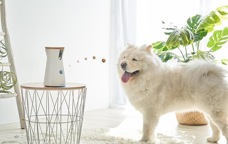 Gewinnt drei Hundekameras von Furbo im Wert von je 259 Euro!